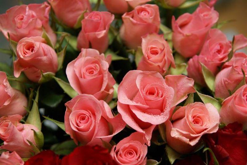 Ученые научились делать розы более ароматными и яркими