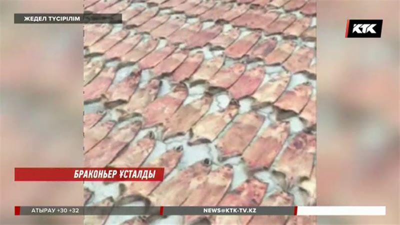 Алматы облысында ондатрларды қынадай қырған браконьер ұсталды
