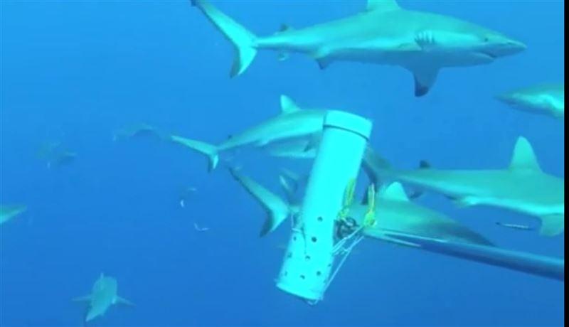 Группа ученых обнаружила потерянные виды акул в Тихом океане