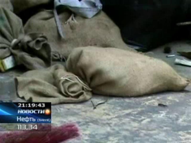 В Индонезии семь изголодавшихся собак загрызли своего хозяина