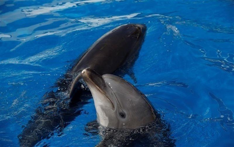 В Мехико запретили представления с участием дельфинов