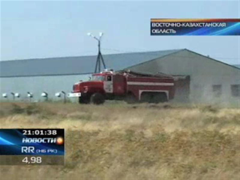 Пожары в ВКО: угроза возгорания нависла над птицефабрикой