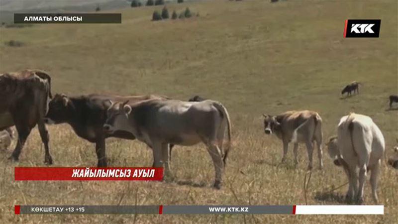 Алматы облысында жайылымның жоқтығынан төрт түлік қырылып жатыр
