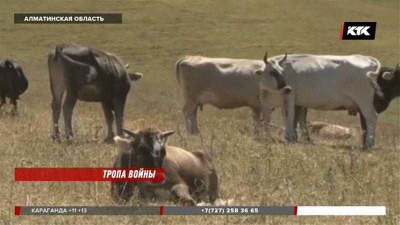 Только строем должен ходить скот в одном из сел Алматинской области