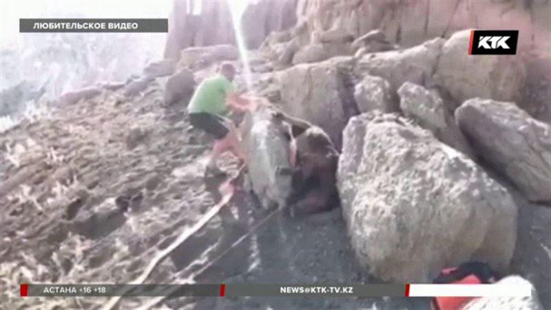 Водители вытащили жеребенка из каменной западни