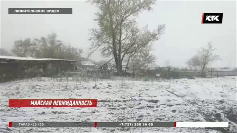 Цветущие деревья замело – в трех регионах выпал снег