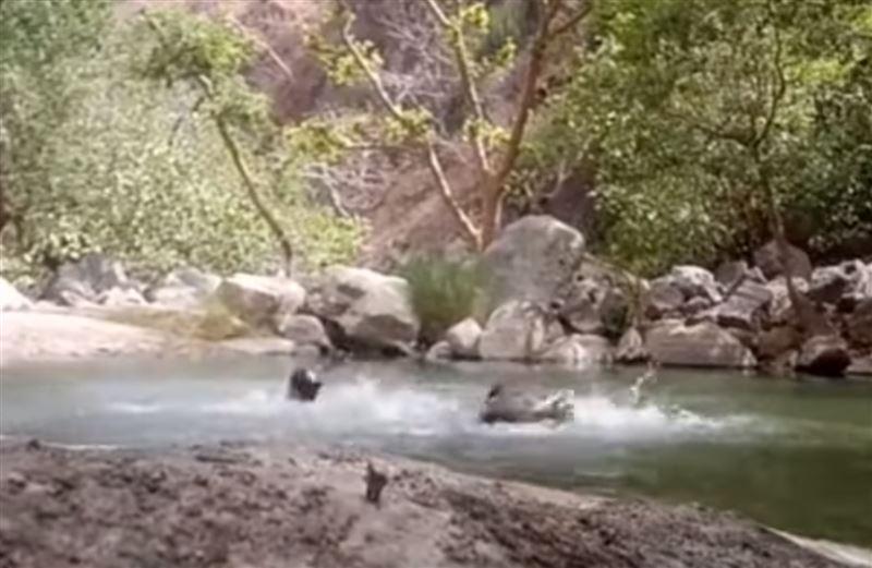 Трое индусов сняли на видео собственную смерть, так как не умели плавать