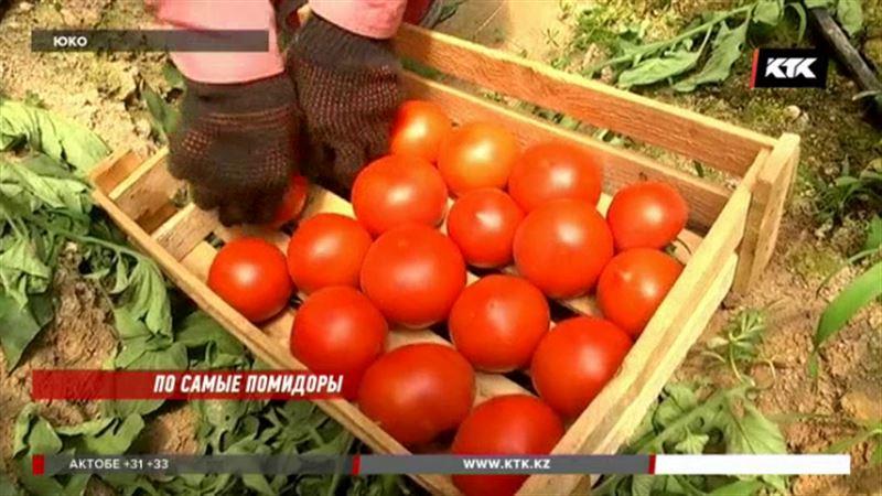 Ни тебе помидоров, ни огурцов: дехкане на грани разорения
