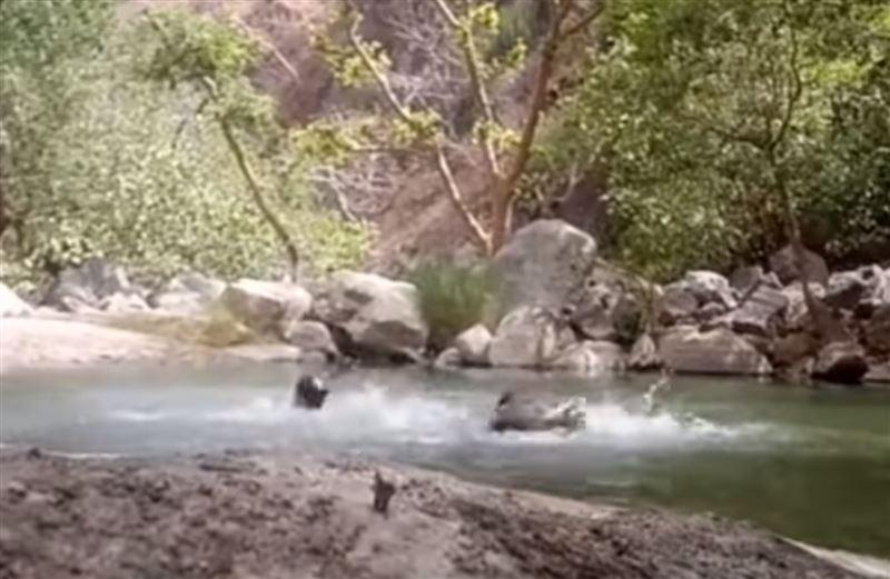 ВИДЕО: Суға батып өлген үш достың соңғы видеосы пайда болды