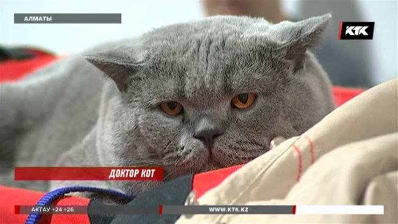 Иметь кошек не только модно, но и очень полезно