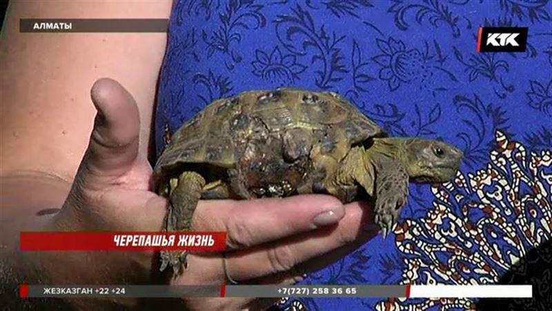 Алматинка уже десять лет спасает черепах