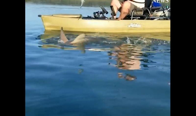 Акула попалась на удочку и несколько минут таскала за собой лодку