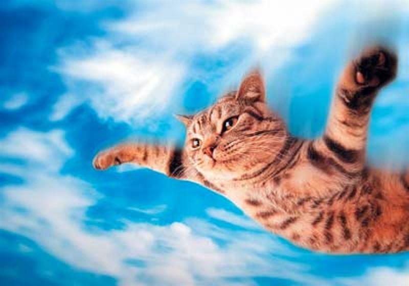 Юноши спустили кота с парашютом с четвертого этажа