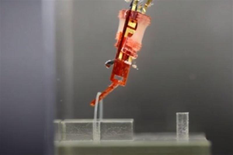 Японские ученые представили робота с биологическими мышцами