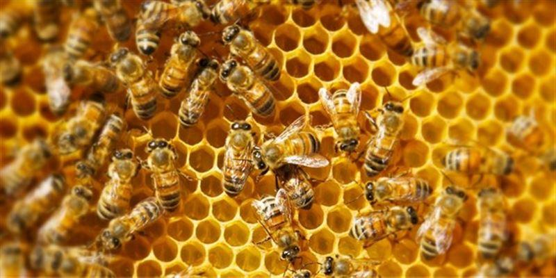 В Швеции неизвестные ограбили две фермы, откуда похитили два миллиона пчел