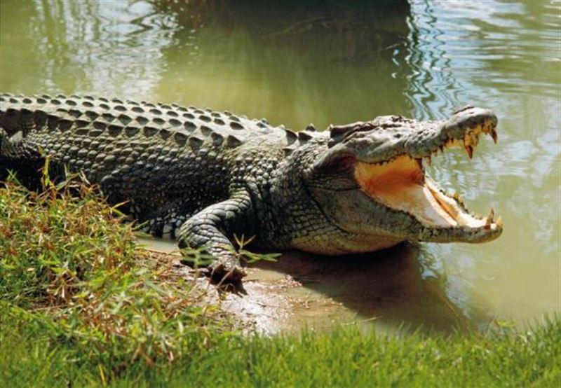 Крокодил убил священника во время обряда крещения