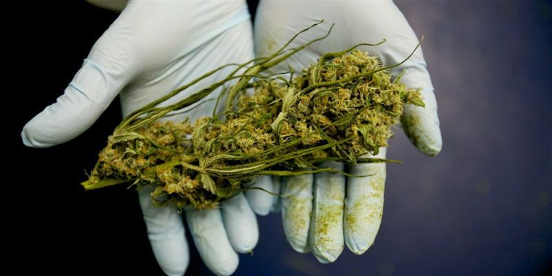 Семейлік полицейлер бір келіден асатын кептірілген марихуана тәркіледі