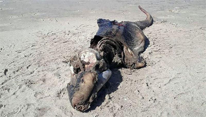 В Уэльсе на пляж вымыло загадочного монстра: жуткое фото