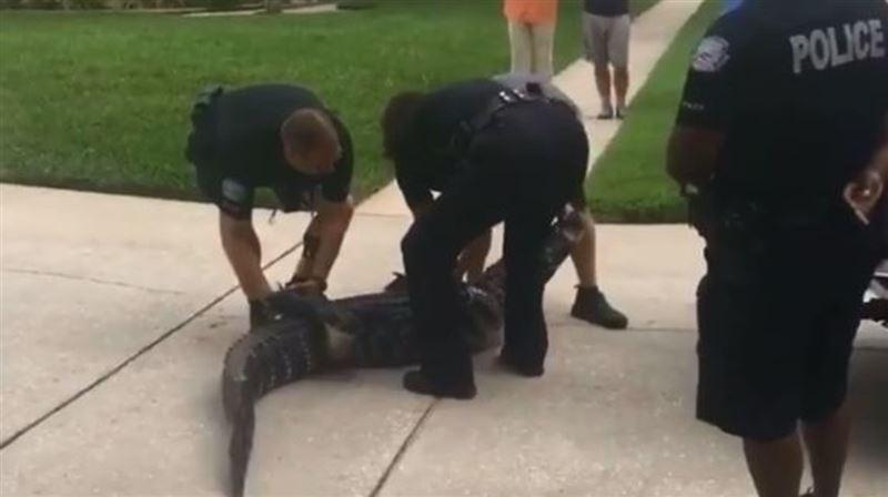 """ВИДЕО: Қолтырауын полиция қызметкерін """"нокаутқа"""" түсірді"""