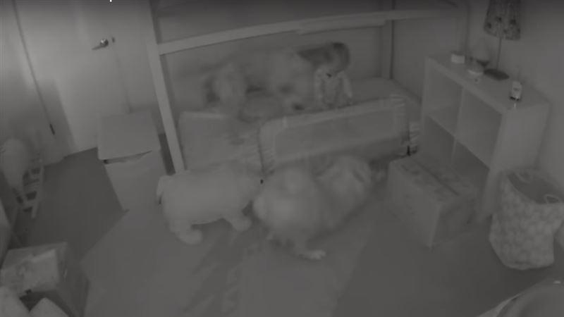 Собаки устроили годовалой малышке «побег из комнаты»