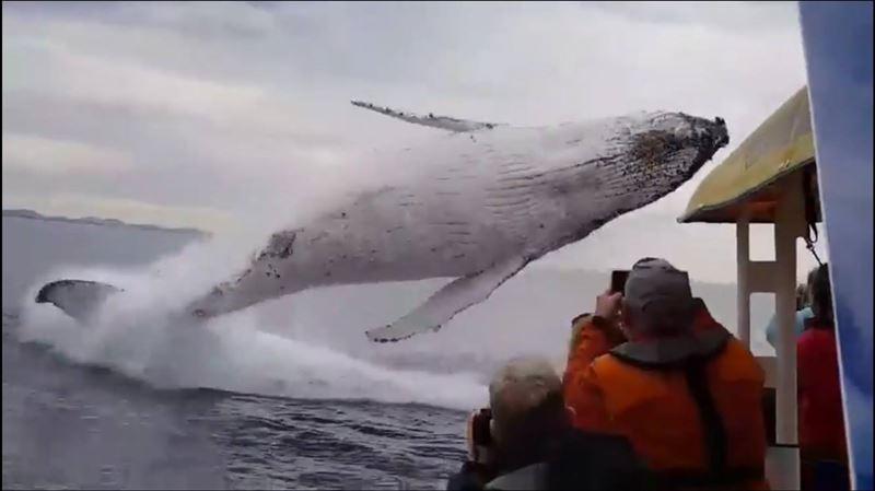 Зрелищно выпрыгнувшего перед туристами кита сняли на видео