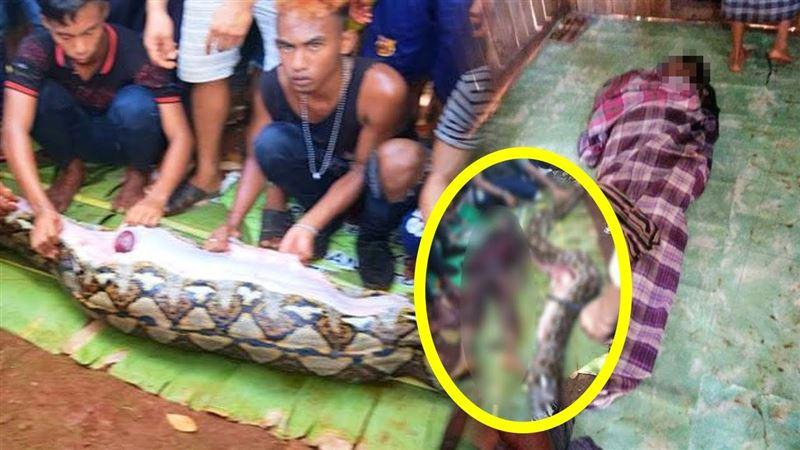 Видео не для слабонервных (18+): Гигантский питон целиком проглотил женщину
