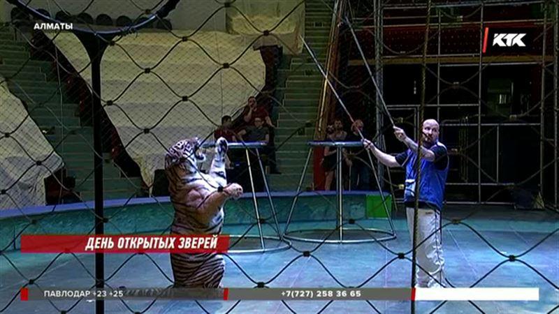 Алматинские дети дрессируют тигров