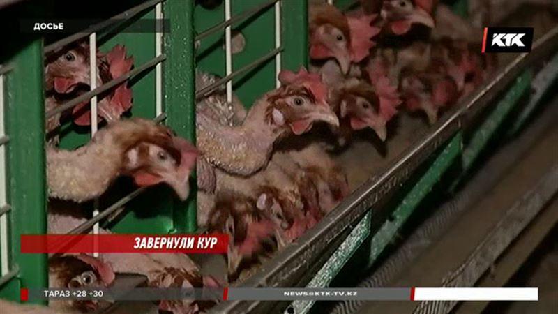 Российскую курятину и яйца запретили ввозить в Казахстан