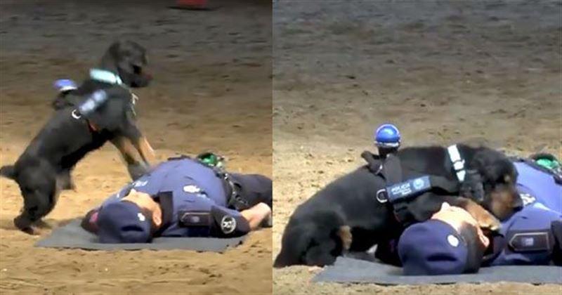 Пес сделал «искусственное дыхание» испанскому полицейскому