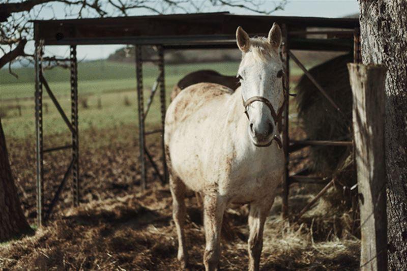 В Краснокамске цирковая лошадь укусила шестилетнюю девочку