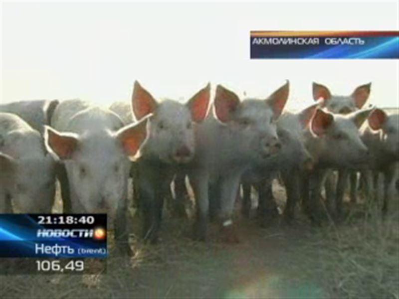В Акмолинской области оштрафовали руководителя свинофермы