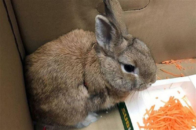 Из-за кролика в коробке в австралийский аэропорт вызвали саперов