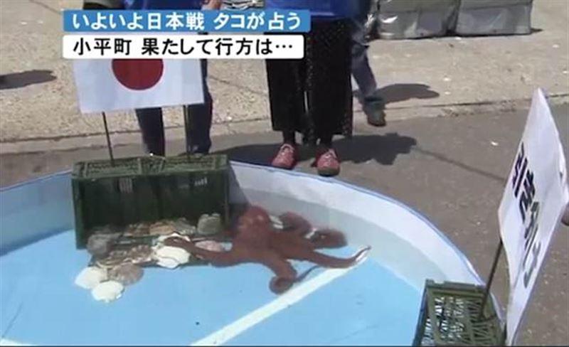 В Японии съели осмьинога-предсказателя итогов матчей ЧМ