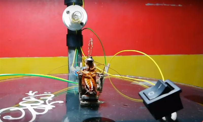 Скульптор смастерил электрический стул, чтобы казнить таракана