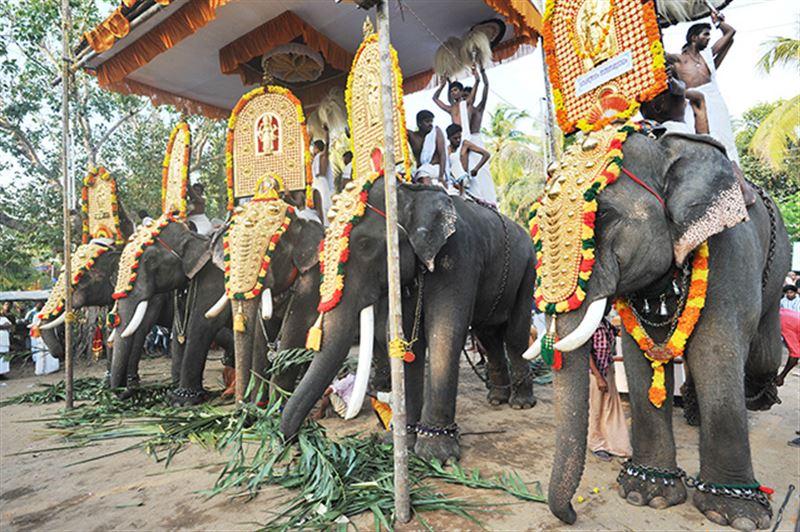 Животные получили юридический статус по решению Верховного суда в Индии