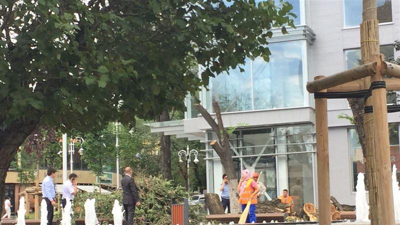 ФОТО: Алматы Арбатында ағаштарды рұқсатсыз кесіп тастаған