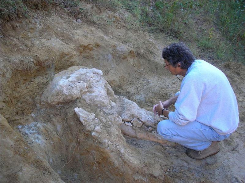 Французский фермер 4 года прятал череп пиренейского мастодонта