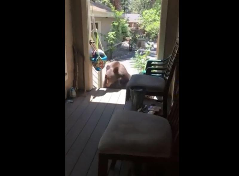Девушка прикрикнула на медведя и прогнала его с крыльца