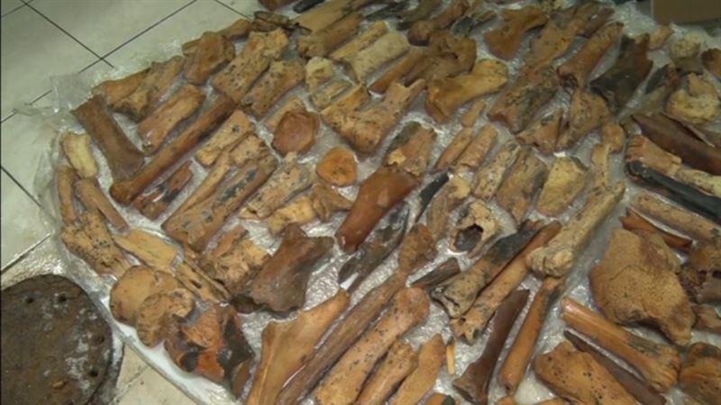 ВИДЕО: Үңгірден тарихқа дейінгі жануарлардың қаңқасы табылды