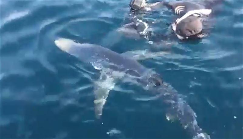 Дайверы поплавали в окружении 20 акул