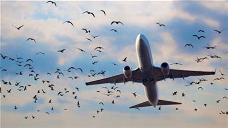 Самолет, следовавший из Шымкента в Москву, столкнулся со стаей птиц