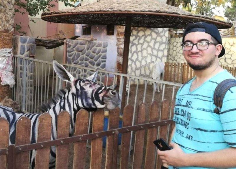 ФОТО: Сотрудники каирского зоопарка перекрасили ослов в полосатых зебр