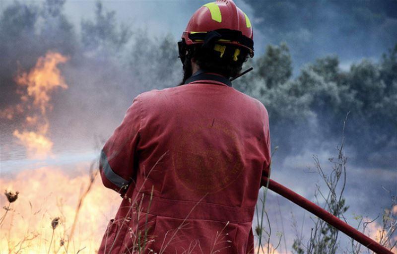 Жертвами лесных пожаров в Греции стали более 50 человек