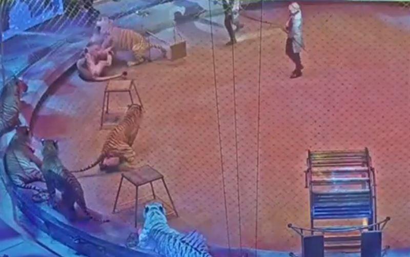 Во время шоу братьев Запашных лев и тигр затеяли драку