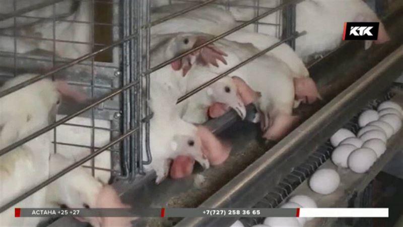 Еще из трех регионов России курицу ввозить запретили