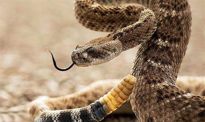 Гремучая змея едва не забралась в полную детей лодку
