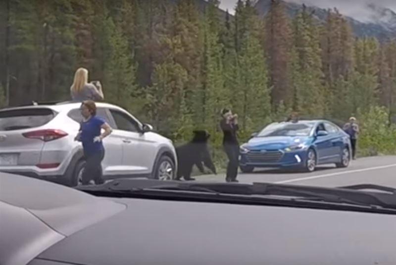 В Канаде медведь разогнал назойливых фотографов