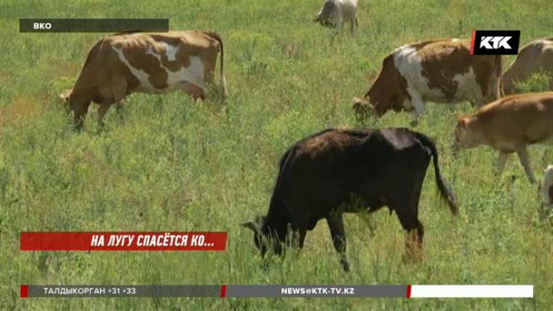 Жители восточноказахстанского села не знают, где пасти коров