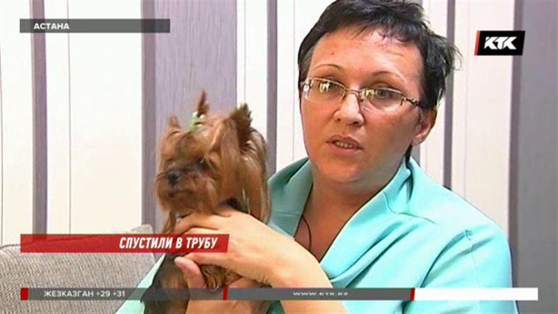 В ветеринарной клинике Астаны щенка якобы смыли в унитаз