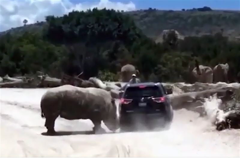 В сафари-парке носорог атаковал семью